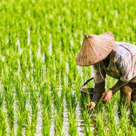'Harvesting' the Excitement in the Rice Lumbung Area, Tegal Mengkeb Village
