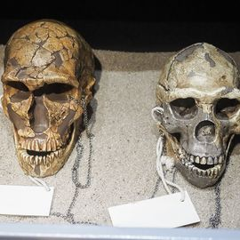 Tracing The Origins and Our Species at Ancient Human Museum