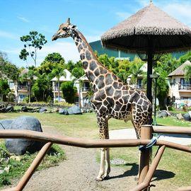 Get Closer to Animals at Bali Safari and Marine Park