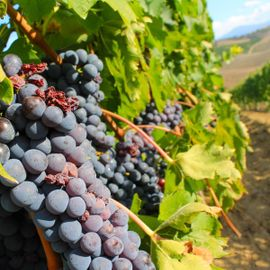 Sanggalangit Village Vineyards, a 'Poetic' Vacation Spot in the Agrarian Region