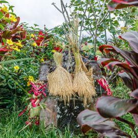 Dewi Sri Bhatara: A Reminder to be Grateful