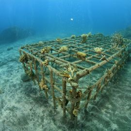 Coral Reef Transplantation in Celukan Bawang: An Effort to Build a Balanced Ecosystem