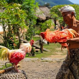 Tabuh Rah, A Tradition to Maintain the Sustainability of Mother Earth