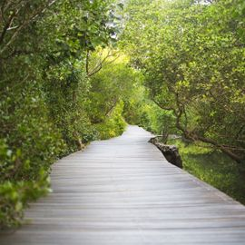 Perfect Holiday in the Nusa Lembongan Mangrove Forest