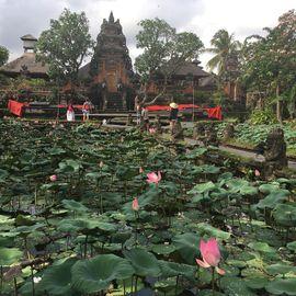 Lotus Flower Blossomed in Taman Saraswati Temple