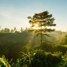 Gatep Trees, Useful Plants Written in Taru Pramana's Lontar