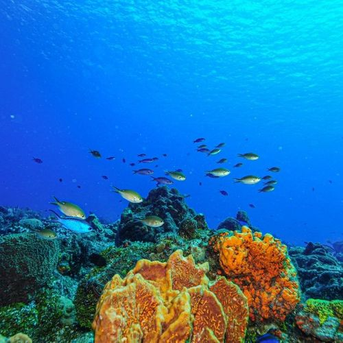 Snorkeling and Diving in Gili Selang, The New Attraction in East Bali