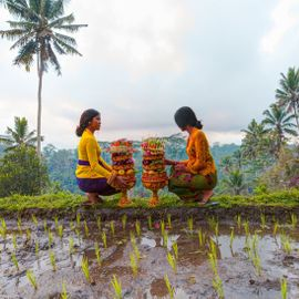 Menyama Braya: Wisdom in Creating Harmony