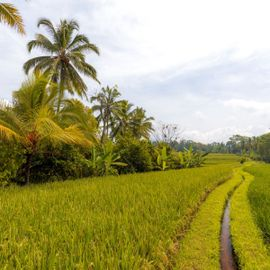 Subak Irrigation System, the Overview of Harmony and Togetherness in Balinese Agricultural Culture