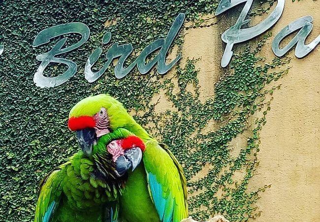 Visitbali Bali Bird Park And Reptile Park Gianyar Bali