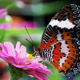 Meeting the Colorful Flying Creatures at Kemenuh Butterfly Park