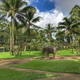 Playing with Cute Elephants at Elephant Safari Park