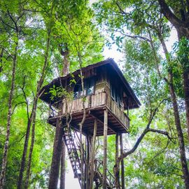 Temega Tree House: The Sensation of Nature Tourism on the Side of the Road