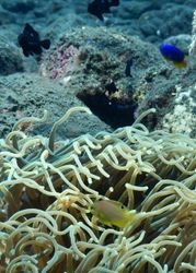 Coral Reefs in Celukan Bawang Water: Home for Newly Found Species of Fish